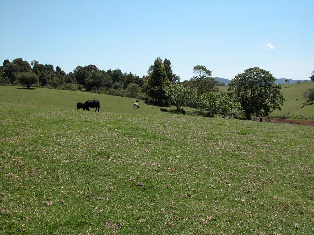 Dorrigo plateau 2.JPG