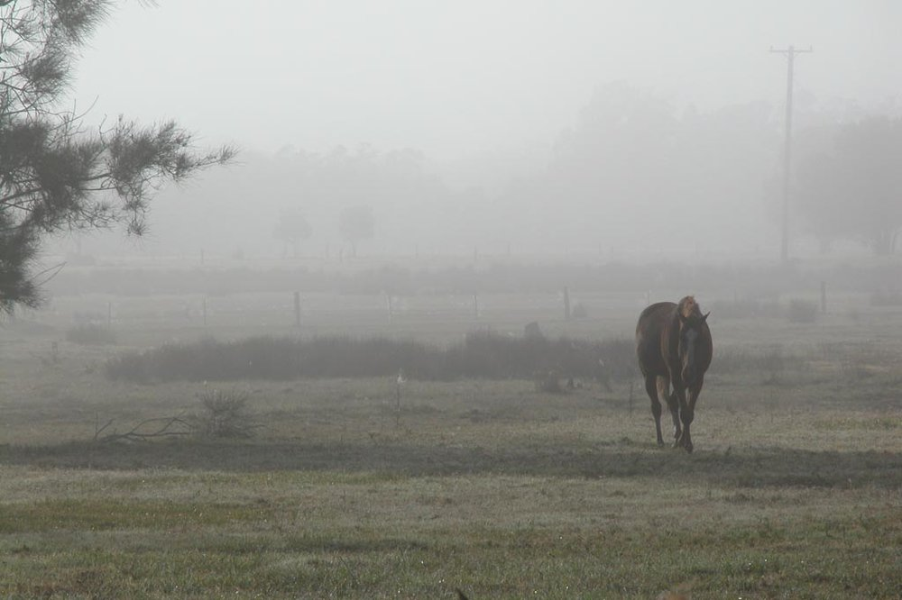 Horse early Morning007.JPG