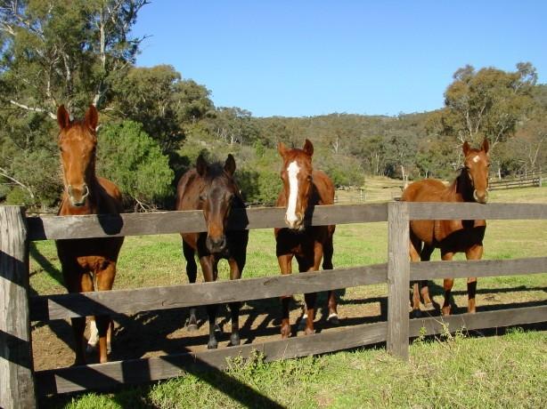 Horses, UHSC 14038.JPG