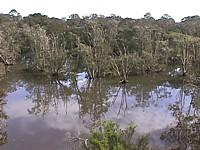 Shortland wetlands.jpg