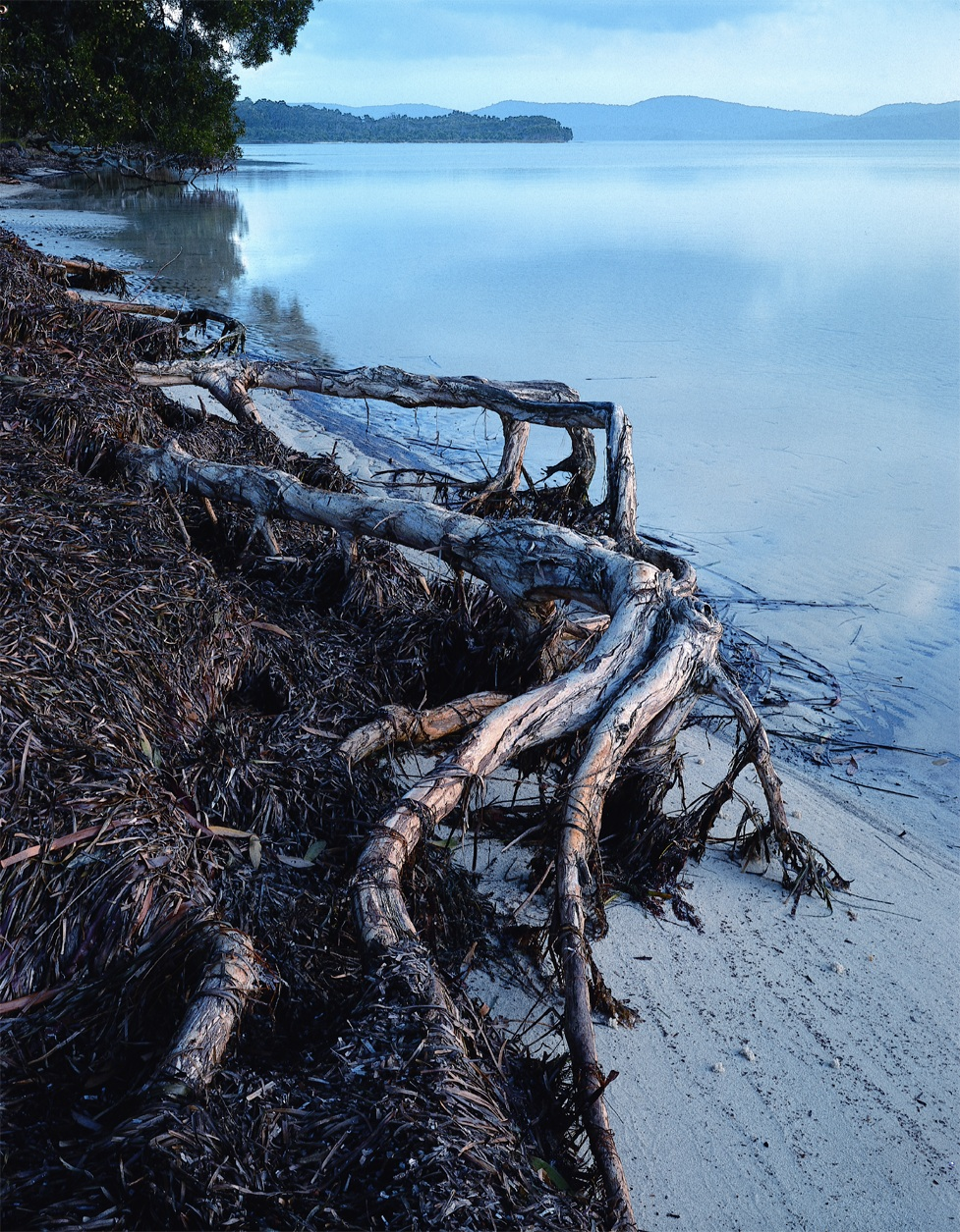 driftwood on lake shore.jpg