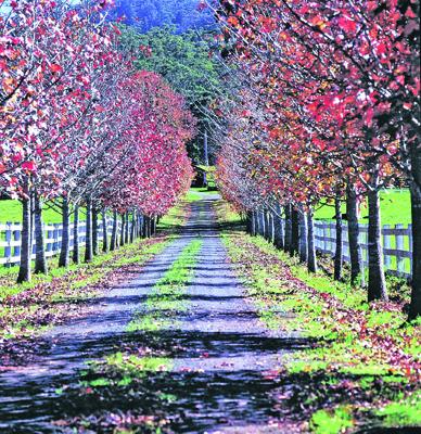 Autumn Road-Yarramalong - Hinterland, 16021.jpg