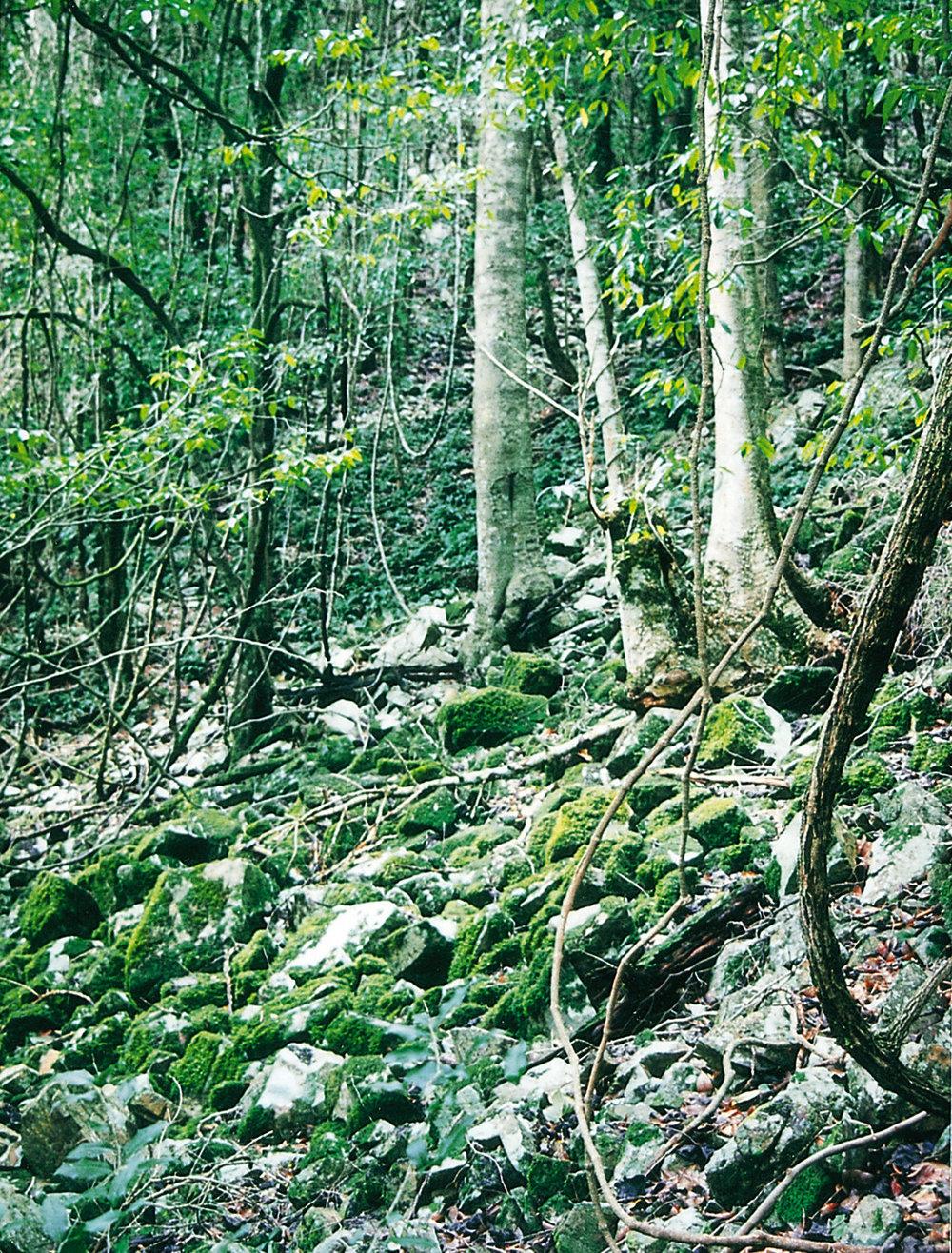 Eaglereach rainforest.jpg