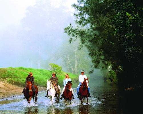 Horse 1 - Glenworth Valley 04028.jpg