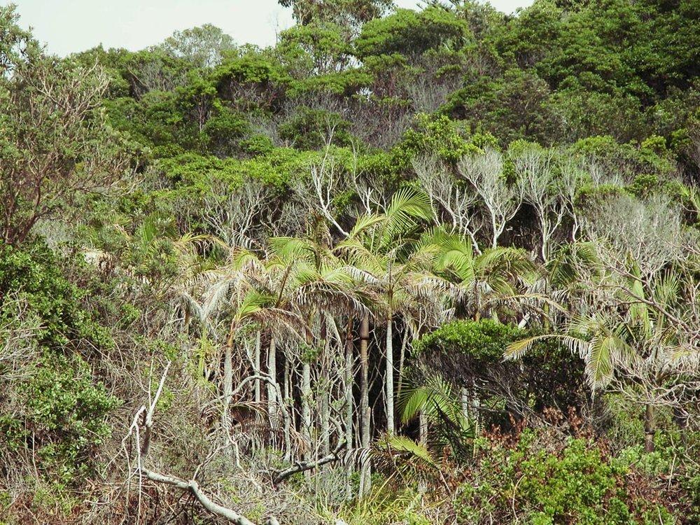 Rainforest at Shelley Beach.JPG