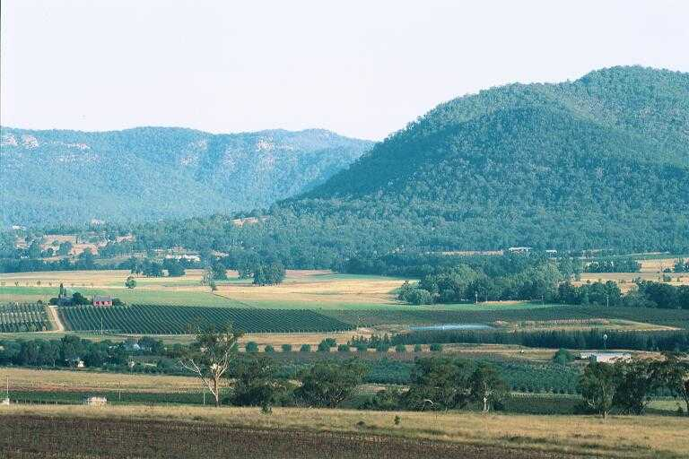 Vineyards and Hills Singleton.JPG