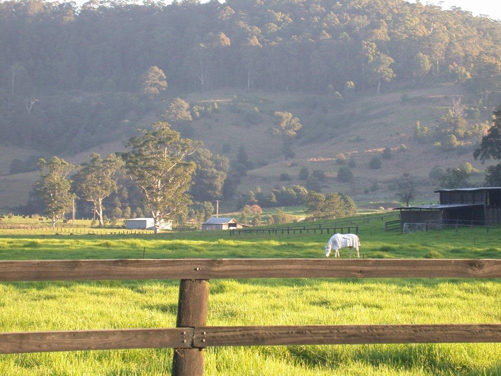 Yarramalong Valley 4.JPG