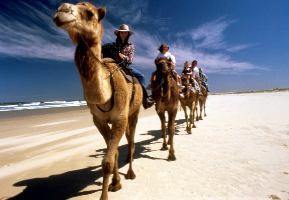 Camel-riding--Port-Stephens-Scan10235_edited.jpg
