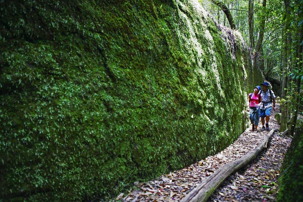 Moss-Wall,-NPWS-10047.jpg