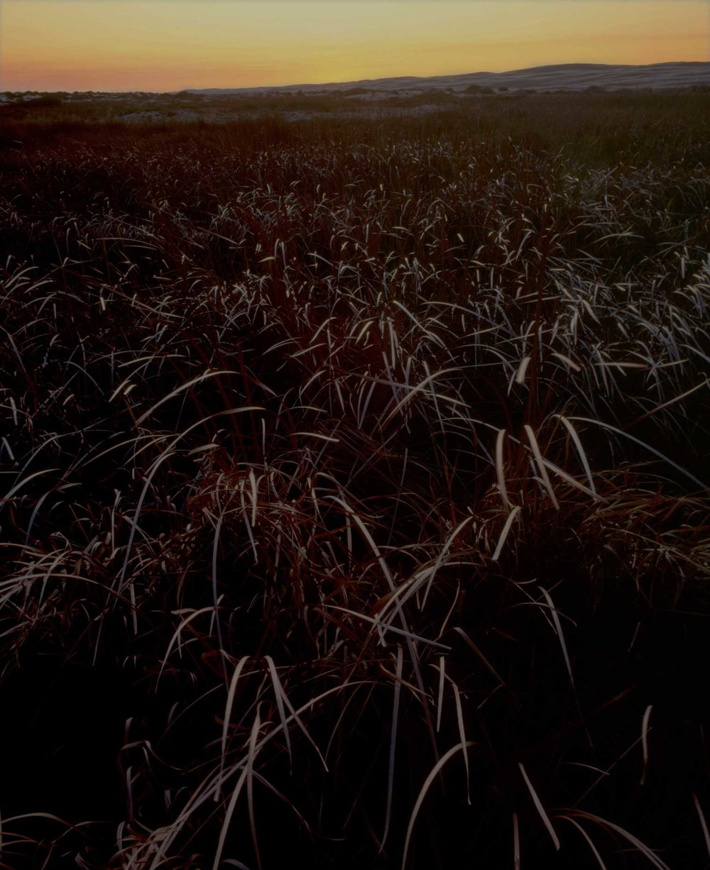 reeds,-sunset-stockton-bight-.jpg