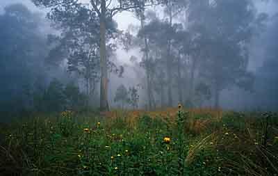 Wildflowers, NPWS 10050.jpg
