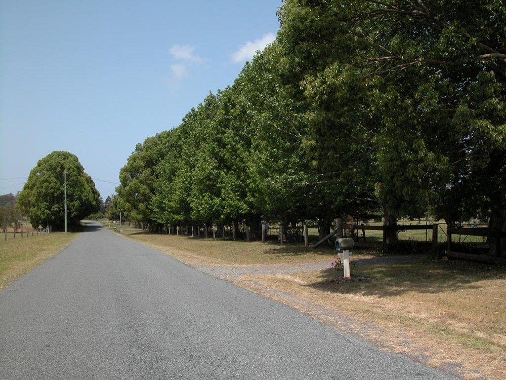 Boambee Road001.JPG