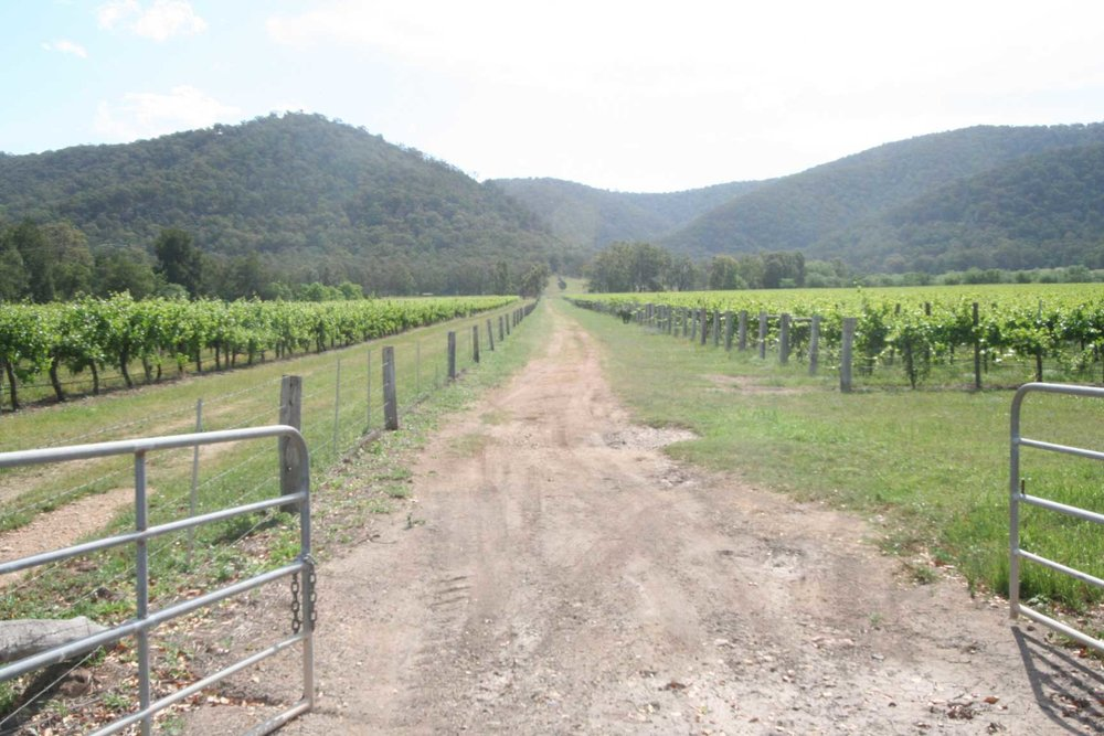 Watts-Creek-Vineyard,-804-Broke-Rd,-Singleton.jpg