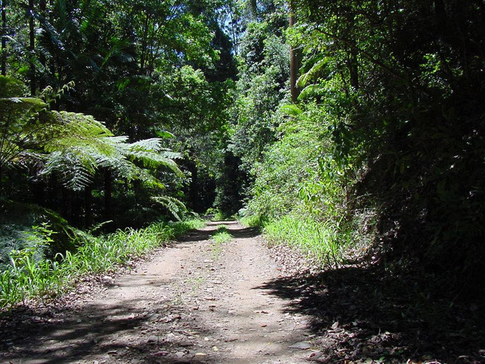 Way Way State Forest 010.jpg