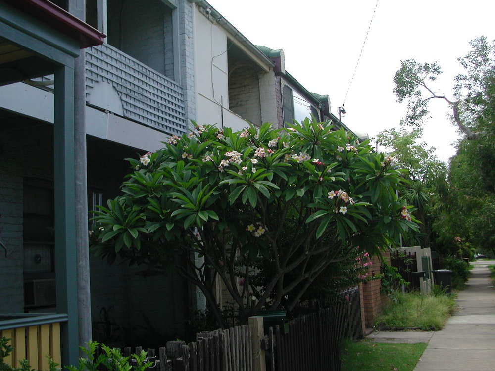 Gipps St- Carrington 2.JPG