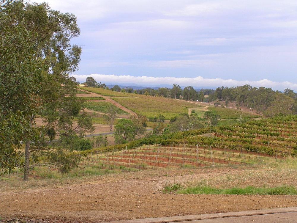 Briar Ridge Vineyard 2.JPG