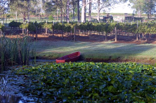 Moorebankd Vineyard Boat Vines.jpg
