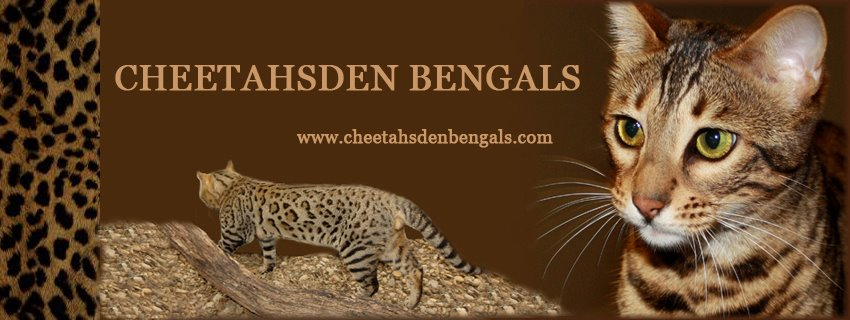 Kelli Faram Cheetahsden Bengals Dallas FoT Worth, TX Kelli@cheetahsden.com
