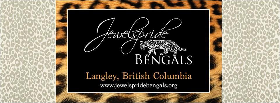 Carmen Klassen Jewelspride Bengals Langley, Brtish Columbia carmen.klassen@gmail.com
