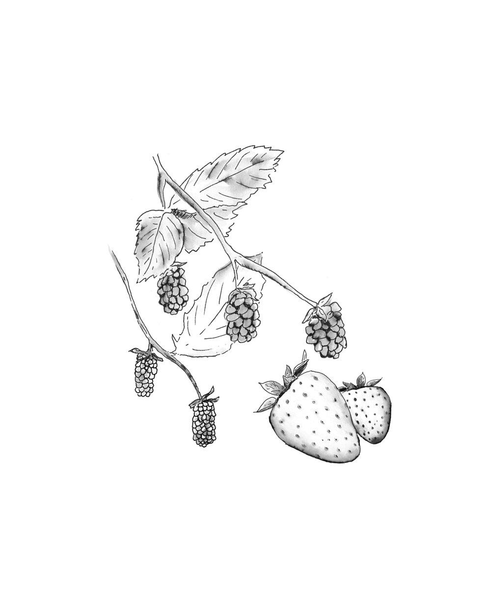 Loganberries, Olallieberries, and Strawberries