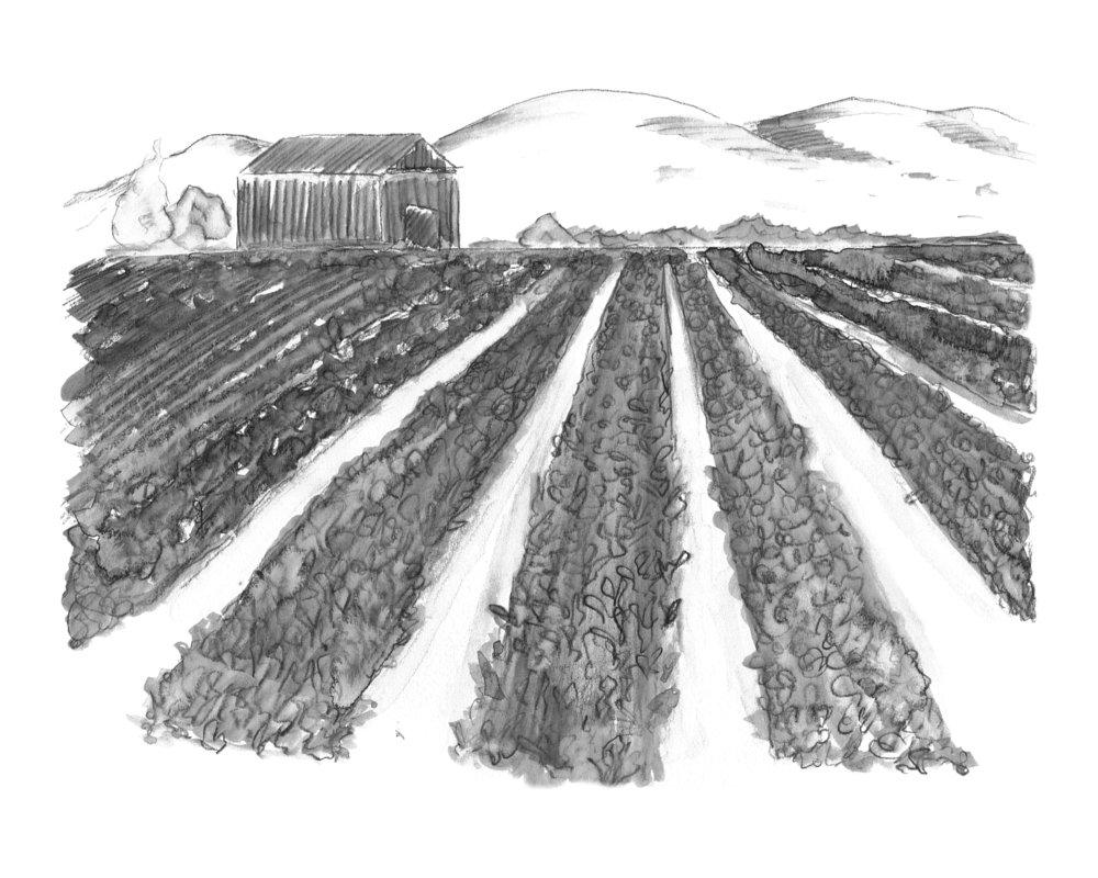 Watsonville Farm