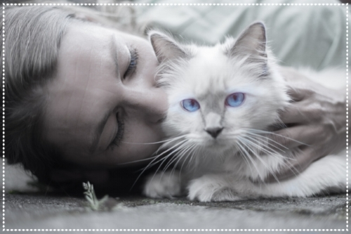 cat-1423844_1920.jpg