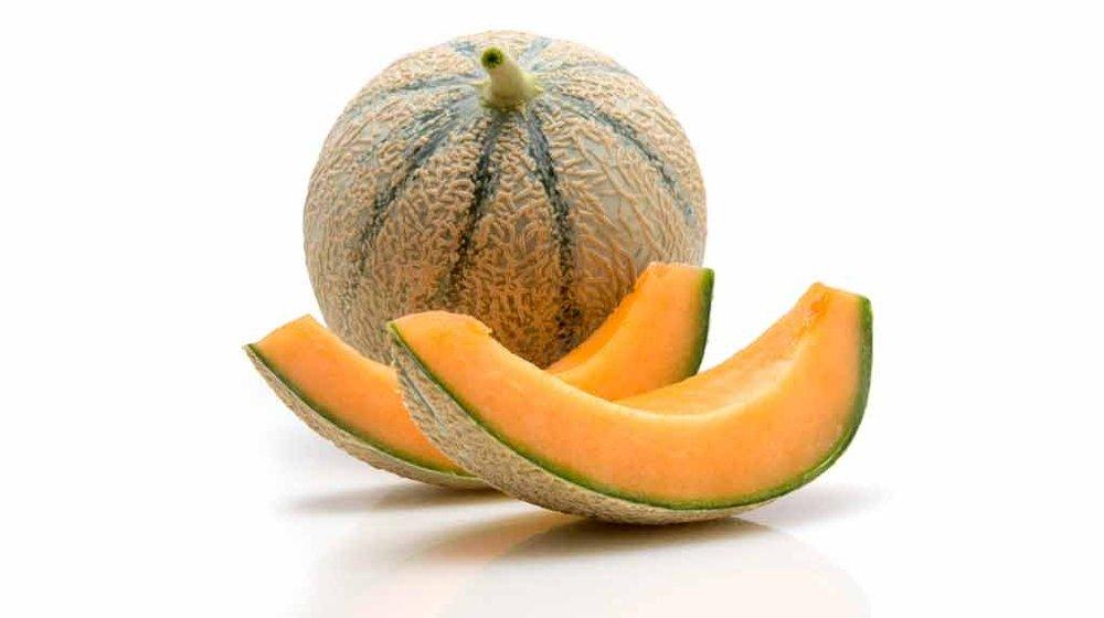 variete-melon-uther-1024.jpg