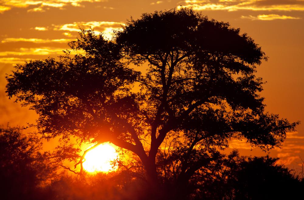 Copy of African Sun