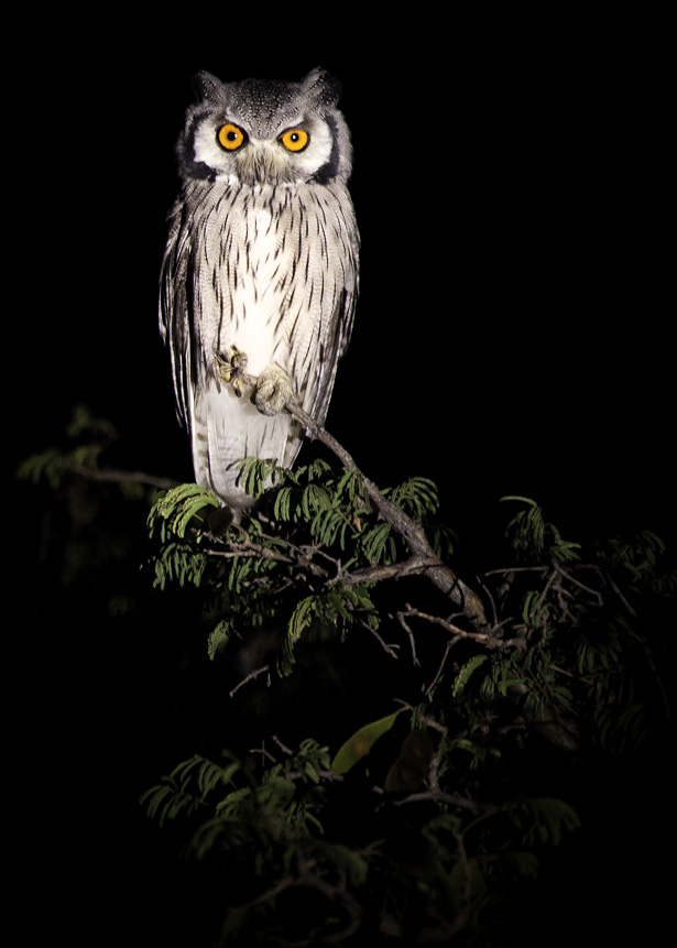 Owl_IMG_69961.jpg