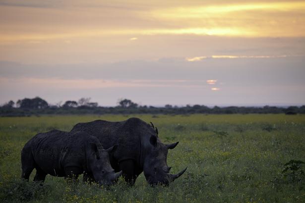 Rhinos-IMG_7020.jpg