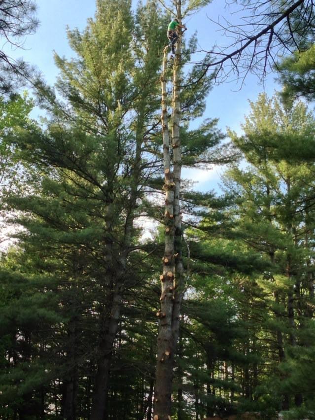 tree pic 2.jpg