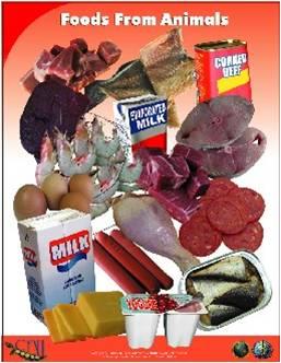 animals - carib food group.jpg