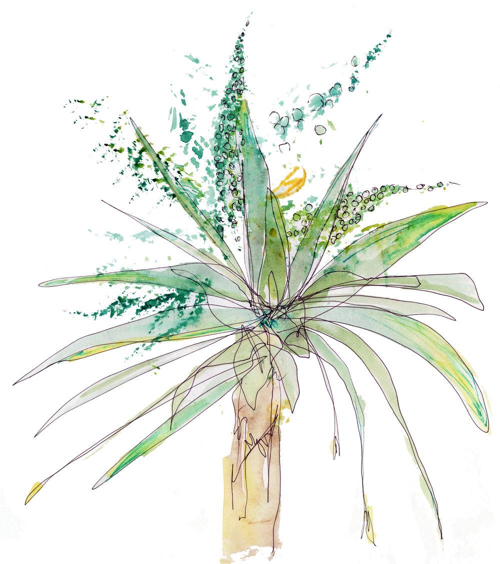 Palm Drawing