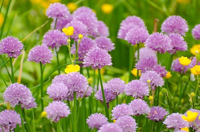 flower-276012_640.jpg