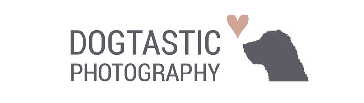 Dogtastic Photography | Dog Photographer | Newport, South Wales UK