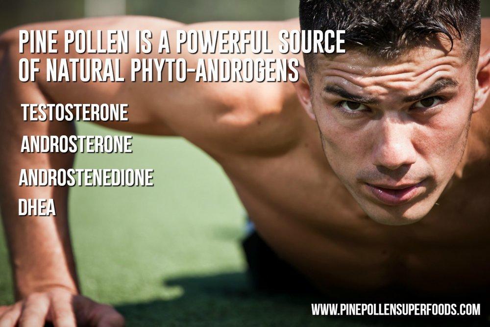Hormones In Pine Pollen