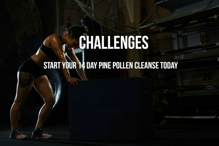 Take the 14 Day Pine Pollen Cleanse Challenge