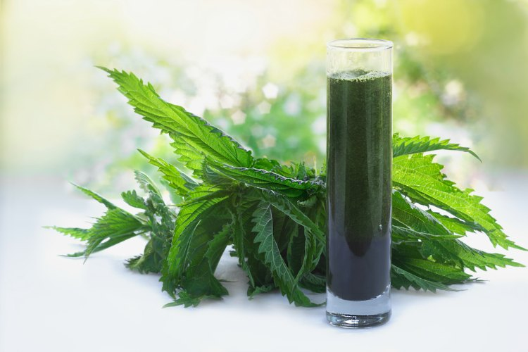 Stinging Nettle Benefits You Need to Experience
