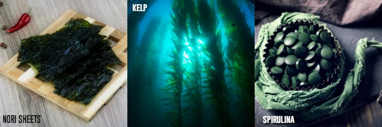 Sea Vegetables and Supplements for Thyroid Health