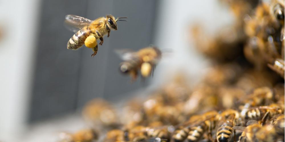 3 Key Benefits of Bee Pollen
