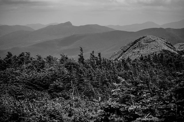 Wrinkles and prickles #adk #adkmountains #algonquin #algonquinpeak