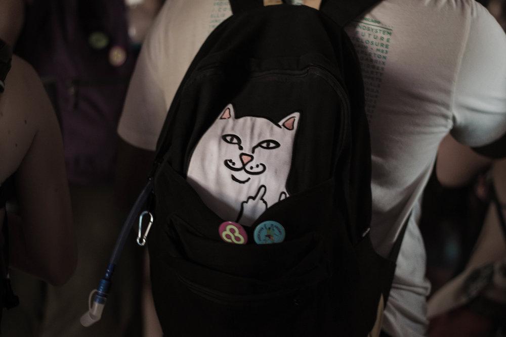 bookbag cat  20170611.jpg