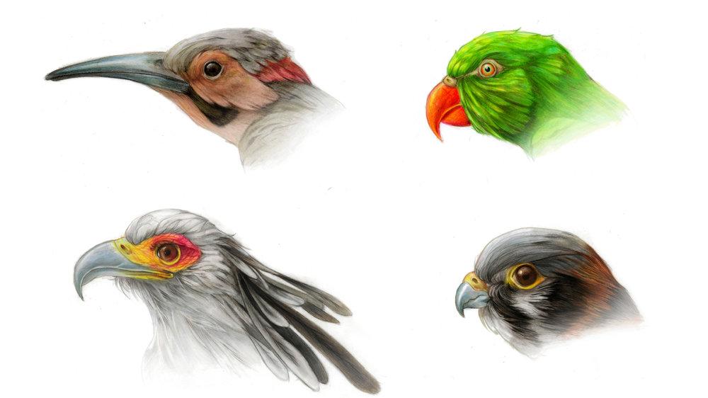 3. Coloured illustrations