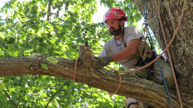 Tree pruning to the highest industry standards -