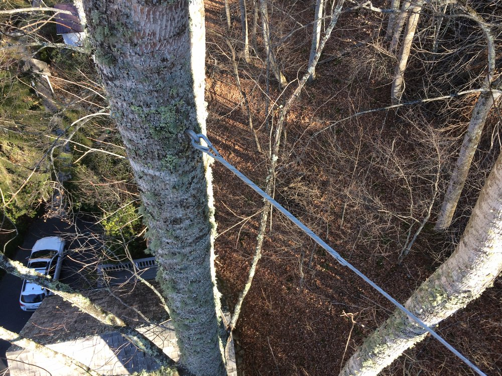 Cabling and bracing technologies are available to protect your trees from high winds and storm damage -