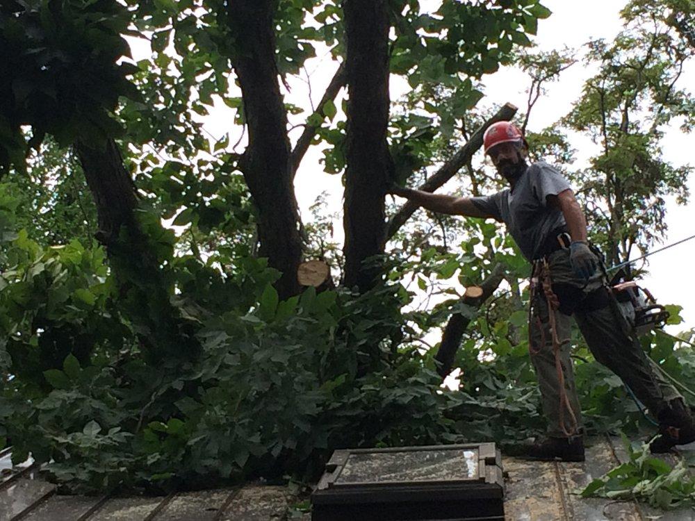 Emergency storm work.            24 / 7 Service. -