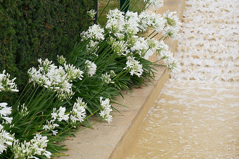 Waterfall-and-white-flowers-Wimbledon-2017.JPG
