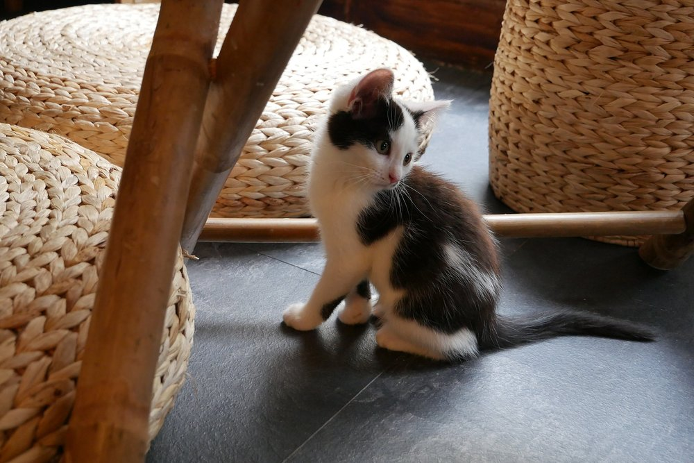 Kitten-under-table-Bristol.JPG