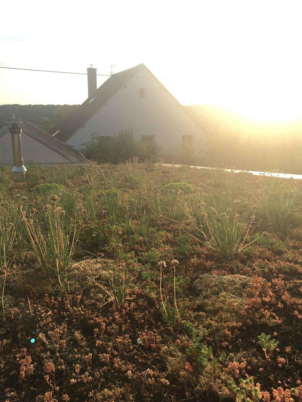 Jardins Eco-responsables
