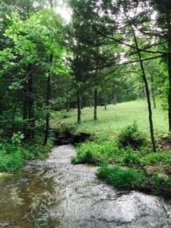 trees-and-creek.jpg